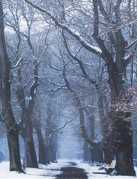 Cold Creatures van Joris Pannemans - Loris Photography