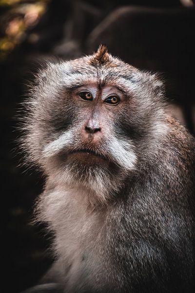 Balinesischer Affe von Bob Beckers