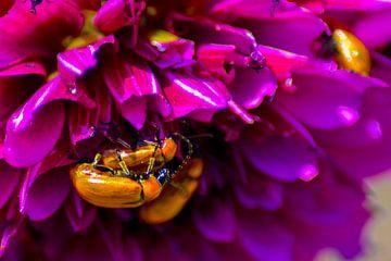Insectenliefde van Winfred van den Bor