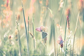 Dreamfields (I) sur Niels Barto