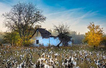 Verfallenes Häuschen unter den Baumwollpflanzen im Herbst, Ungarn von Rietje Bulthuis