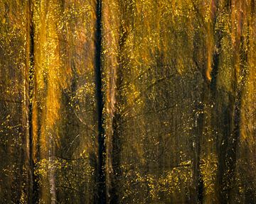 Stimmungsvolles Herbstbild von Birken von Sander Grefte