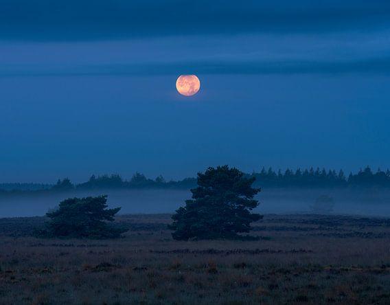 Volle maan en mist