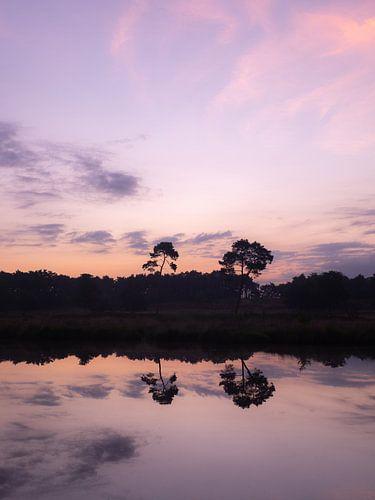 twee bomen in water reflectie met paarse ochtend lucht