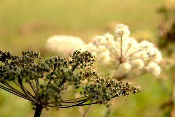 Blumen Natur Ölgemälde Impressionen von Coco Korse