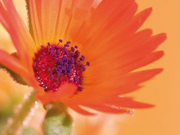 Fleur IV - Blumen - Blumen von Herma Egberts