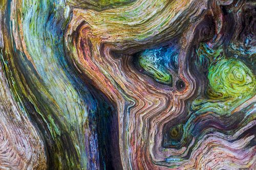Détail sur un arbre sur Karla Leeftink