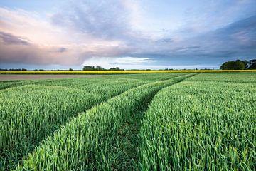 Groen graanland bij Loppersum (Gr.) van Ton Drijfhamer