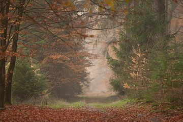 Speulderbos herfst van Nancy van Verseveld