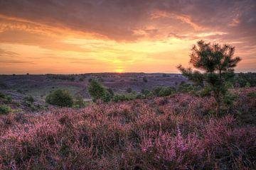 Heidevelden op de Posbank van FotoBob