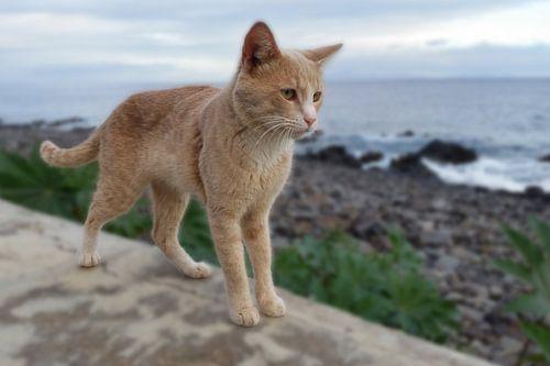 Kat op muurtje (staand) met zee zicht van