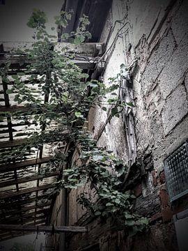 Berk in de muur van Andrea Meister