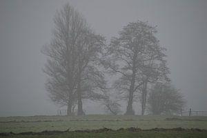 Kale bomen in de mist. Mysterieuze winter van Ronald H
