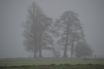 Kahle Bäume im Nebel. Geheimnisvoller Winter von Ronald H