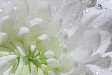 Wassertropfen auf einer weißen Blume von Hetwie van der Putten