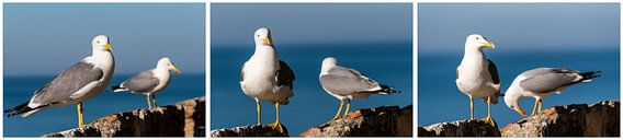 twee zilveren meeuwen op rots met zee als achtergrond uitsnede tiptiek collage