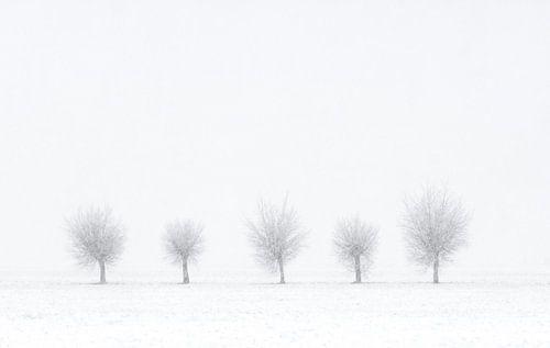 Quinted Winter van