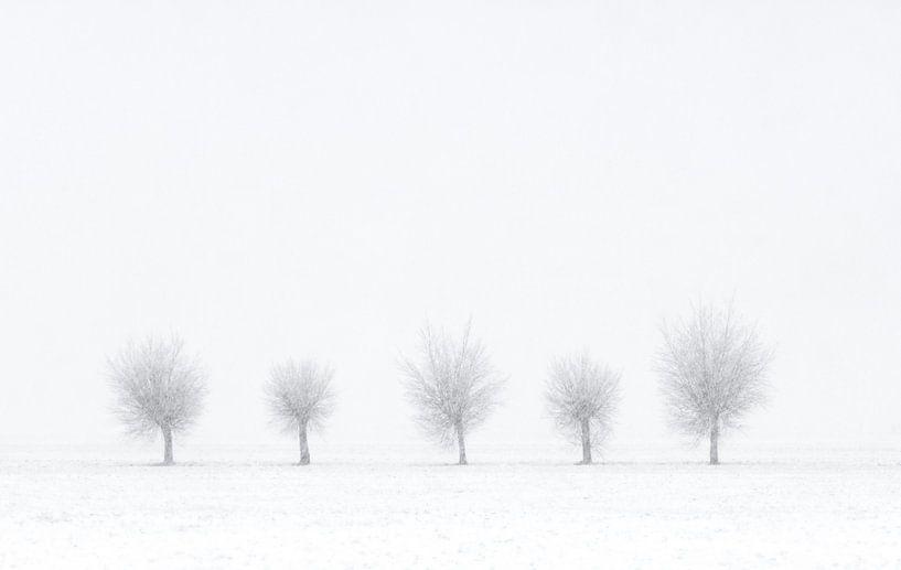 Quinted Winter van M DH