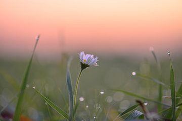 Blumen Teil 33 von Tania Perneel