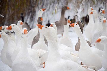 Winter tafereel ganzen sur Lydia Van de Kuilen