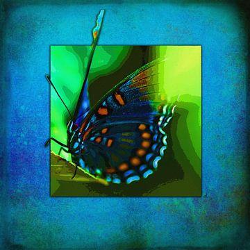 Schmetterling   |   Battus Philenor von Dirk H. Wendt