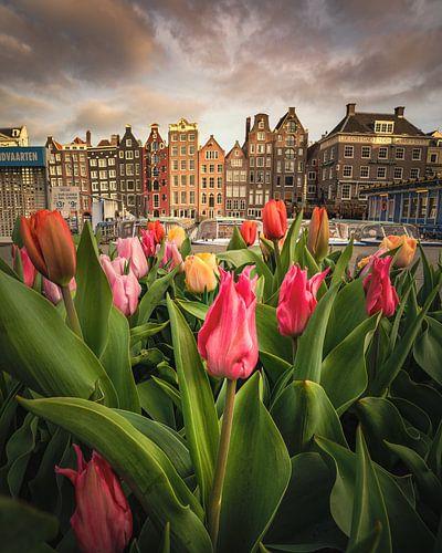 Tulpen festival in Amsterdam