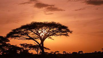 Kenia | White Mountain Movement 3 von Mariëlle de Valk
