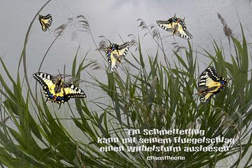 Chaostheorie - Ein Schmetterling kann ..... von Christine Nöhmeier