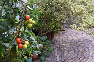 Tomatenplanten in het centrum van Dordrecht van Nicolette Vermeulen