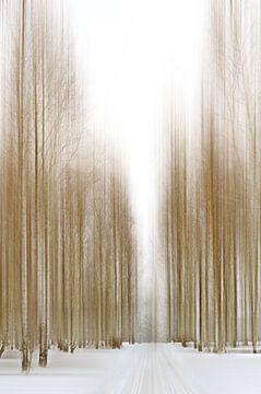 Winter von Violetta Honkisz