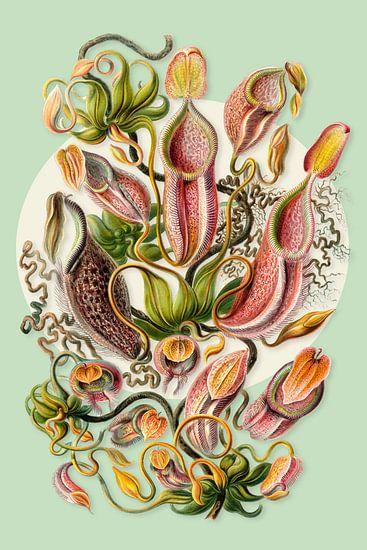The Carnivorous Plants
