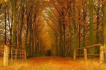 Forêt d'automne sur Tom Kruissink