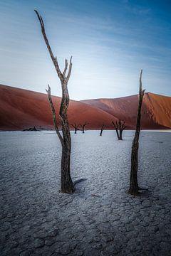 De ingang tot het geplaveide bos van Joris Pannemans - Loris Photography