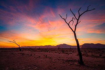 Dode bomen gehuld in kleur van Joris Pannemans - Loris Photography