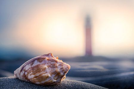 Schelp & vuurtoren Texel  van Texel360Fotografie Richard Heerschap