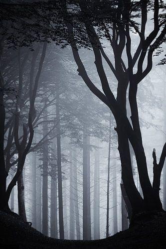 Sacred Silhouette