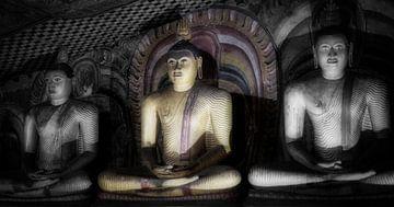 Drie boeddha's in lotushouding