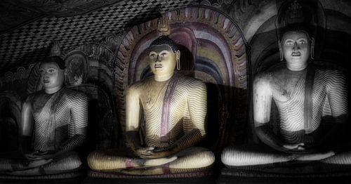 Drie boeddha's in lotushouding van