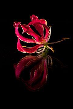 Roze bloem met reflexie. von Doris van Meggelen