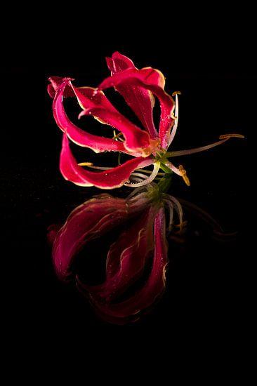 Roze bloem met reflexie.