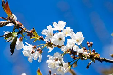 Witte bloemen van Nina Seegers