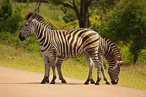 southafrica ... Doppelkopf