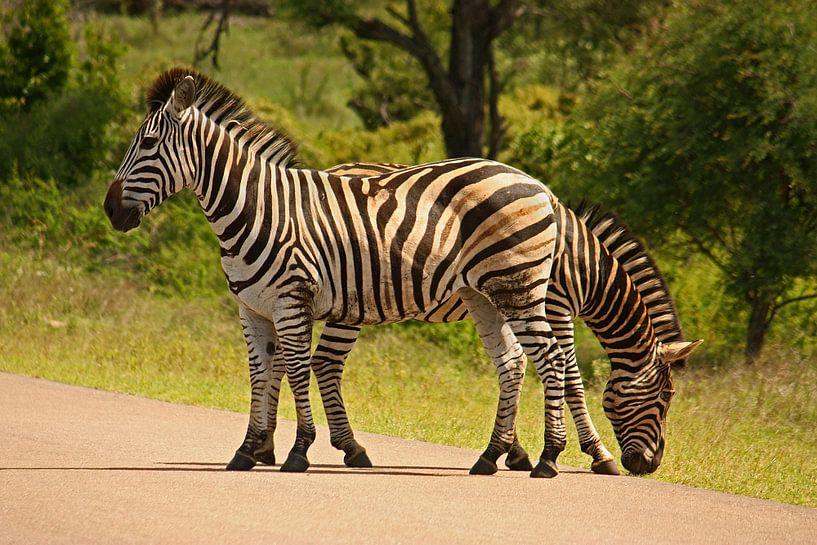 southafrica ... Doppelkopf von Meleah Fotografie