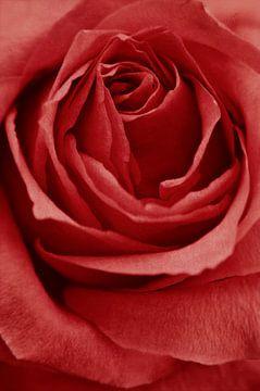 Romance Red van Angela Dölling