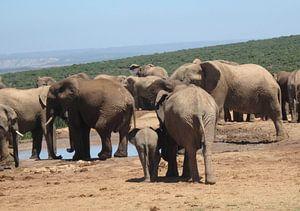 Achterkant grote en kleine olifant van