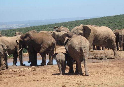 Achterkant grote en kleine olifant