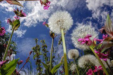 Wildblumen von Jürgen Wiesler