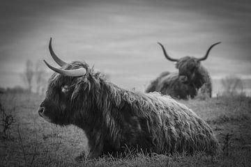 Schotse hooglanders in zwart wit van Dirk van Egmond