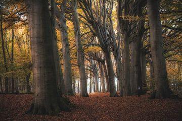 Bos van Reinier Snijders