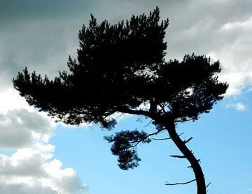 Silhouetten von hohen Bäumen von Joke te Grotenhuis